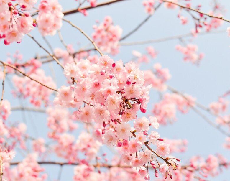 Cięcie drzew owocowych - najważniejsze zasady