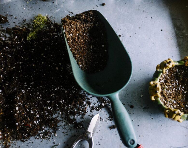 Wiosenna pielęgnacja roślin w naszych domach – przesadzanie i przycinanie